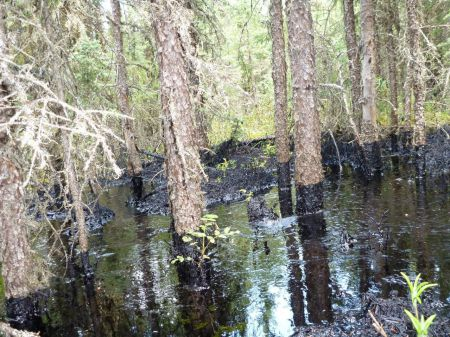 More than one million litres of bitumen have been recovered at a tar sands spill in the Cold Lake Air Weapons Range, and the spill continues. Photo credit: CNRL / Emma Pullman