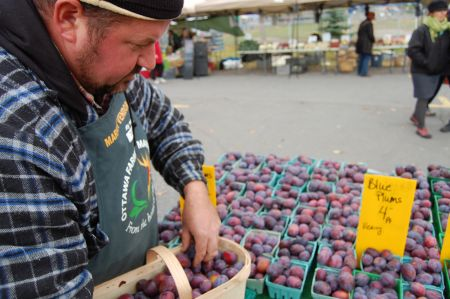 Ontario fruit grower Torrie Warner said that extreme weather this year wiped out 80 to 90 per cent of his apricots, cherries, and plums. PHOTO: David Koch