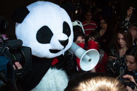 Pandas like this get kettled and ticketed $637 by the Montreal police. [photo: Alexis Gravel]